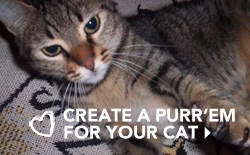 Create a Purr'Em For Your Cat